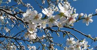 jupe printemps