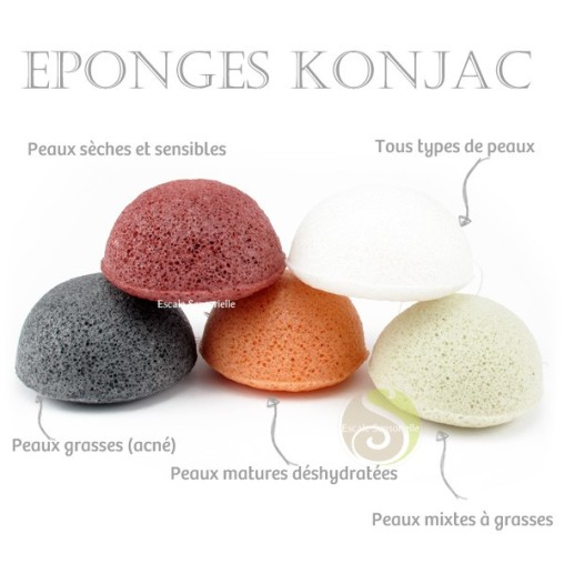 article-eponge-konjac-photo-4