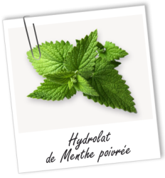 article-points-noirs-menthe