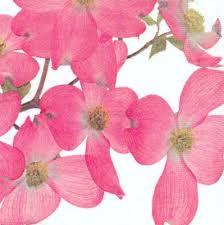 article-wl-fleurs-japonaises