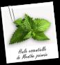 FT_trombone_plante_HE_menthe-poivree
