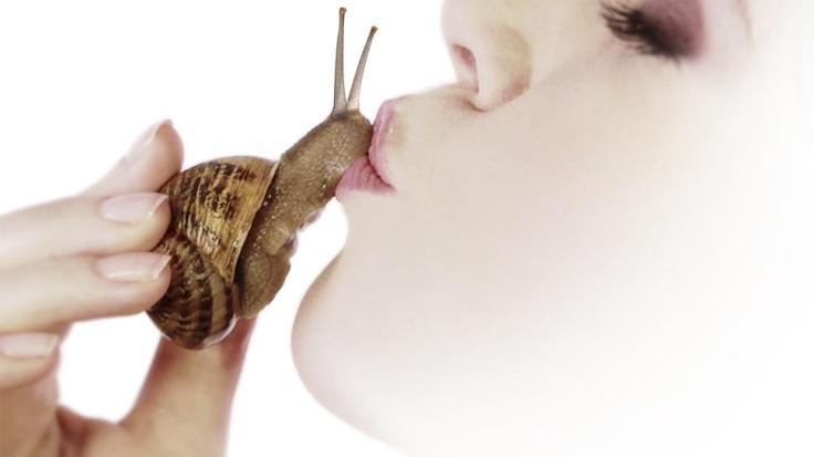escargot-4
